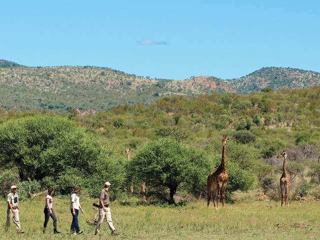 Guided Kruger National Park Walk | Hazyview | Things To Do